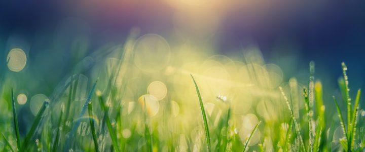 春の食材とその効能や取り入れ方